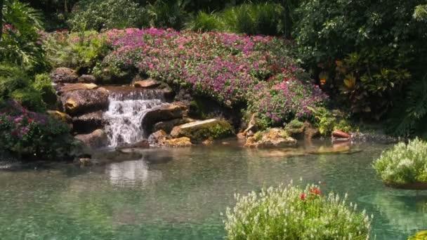 Egy ember által áramló kert vízesés körül virágok, a tiszta víz áramlik a Pond virágok sodródnak a víz felszínén.
