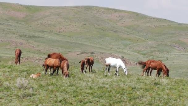 Lóállomány a tavaszi legelőn.