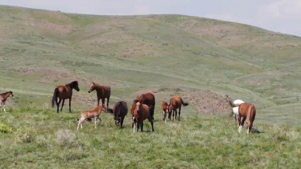 Stádo koní na jarním pastvě.