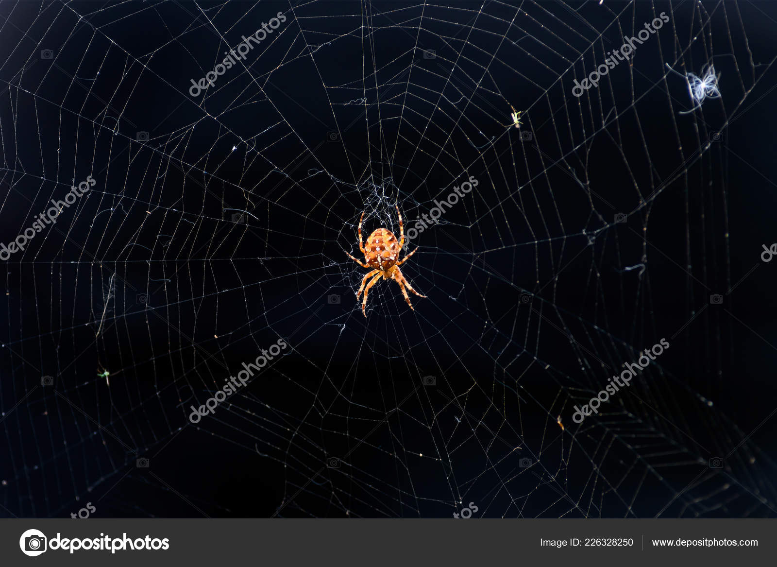 Red Spider Spider Web Dark Background European Garden Spider Scary