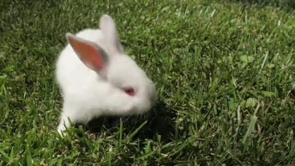 Weißes Kaninchen läuft auf dem grünen Gras. Kleines Kaninchen im Garten. Weißer Hase aus nächster Nähe. Kaninchen ruht auf dem Gras. Kaninchen galoppiert auf dem Gras, kleines weißes Kaninchen, Kaninchen essen Gras, Kaninchen Nahaufnahme.