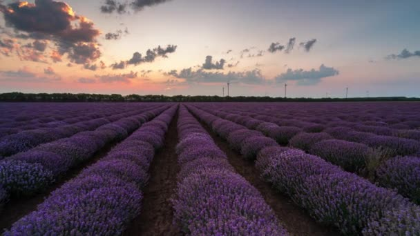 Amazing time lapse from night to day with moving clouds and rising sun over a beautiful blooming lavender field