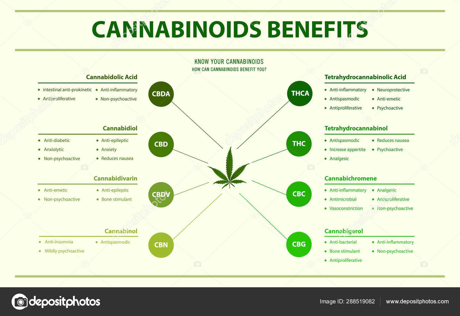 Cannabinoids benefits horizontal infographic — Stock Vector