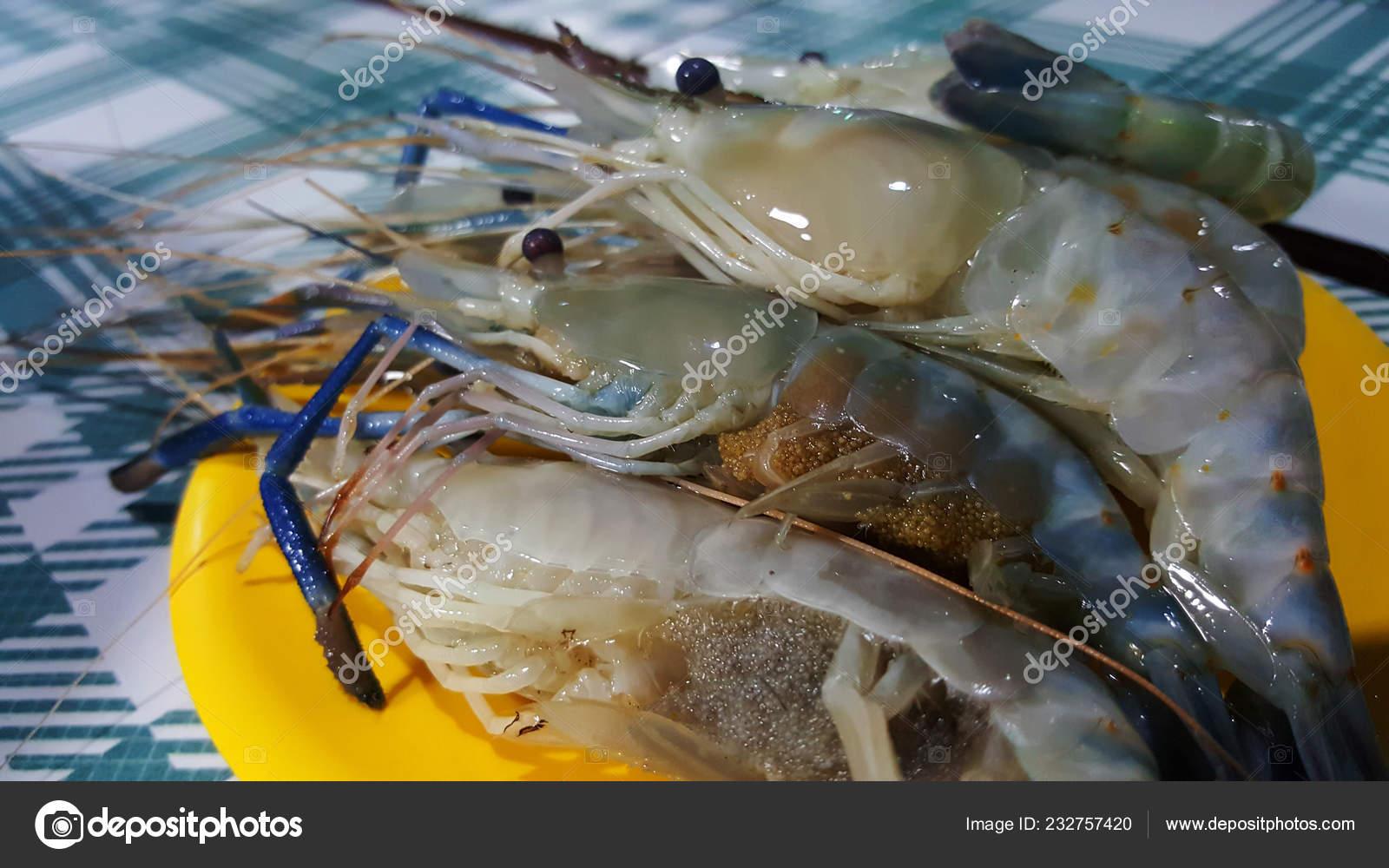 Giant River Prawn Giant Freshwater Prawn Shrimp Eggs — Stock