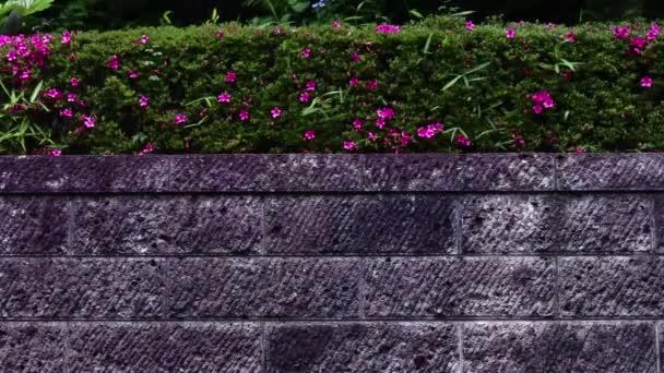 Gartenmauer mit Blumen und Schmetterling