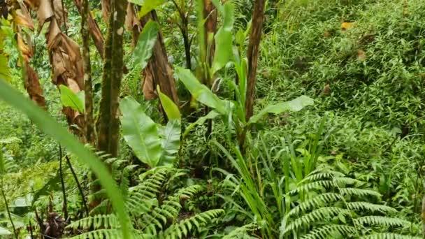 grüne Blätter nach dem Regen im Dschungel