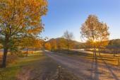 Alberi di autunno e Alba