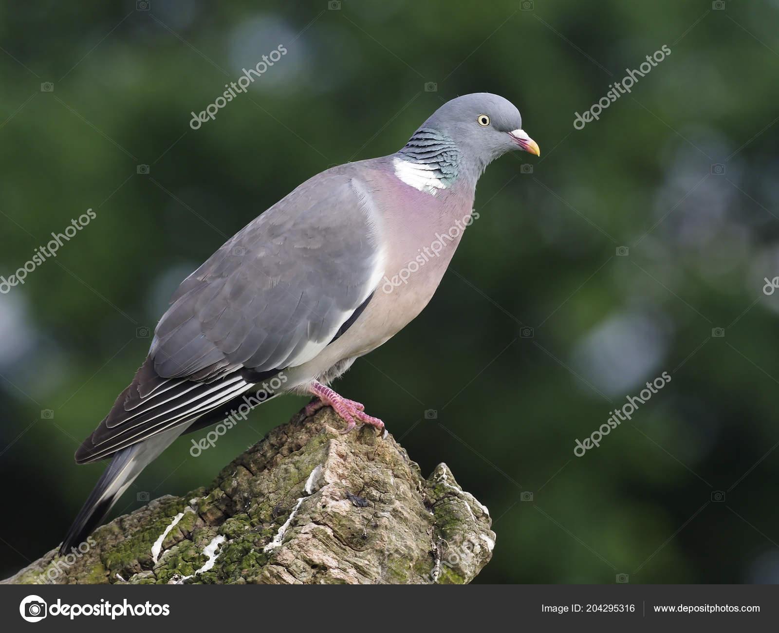 μεγάλο βρετανικό πουλί μαύρο έφηβος fuck στον κώλο