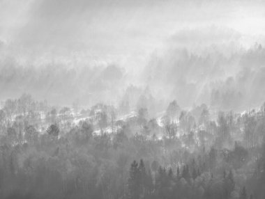 The misty land. High trees and hill peaks increased from thick fog. The first sun rays create sharp outlines in mist.