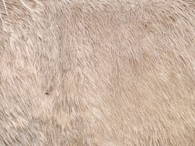 Caring for horse in the winter, warm thick fur on horse body with right layer of subcutaneous fat