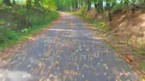 Hyperskleróza. Subjektivní kamera se pohybuje vpřed po cestě v podzimním lese, slunečný podzimní den