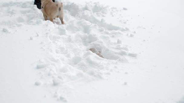 A nő játszik a játék, és neki a mély hóban mopsz