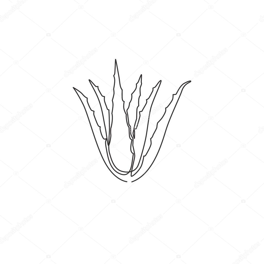 Single Continuous Line Drawing Of Healthy Organic Green Aloe Vera For Farm Logo Identity Fresh Tropical Succulent Plant Concept For Agricultural Icon Modern One Line Draw Design Vector Illustration Premium Vector