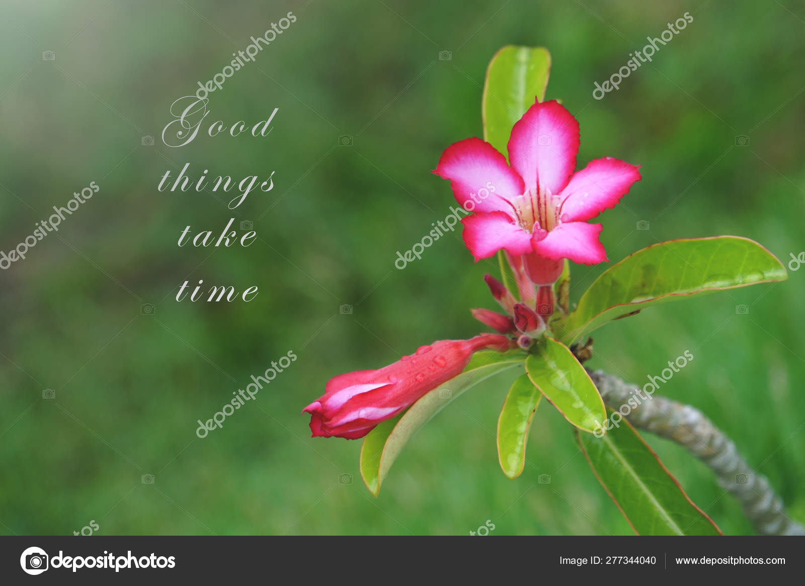 Motivational Quotes Good Things Take Time Blurry Pink Flowers Green Stock Photo C Dinmy73 277344040