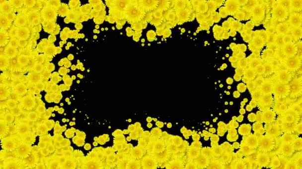 Krásný rostoucí květiny žluté pampelišky, zakryti části obrazovky. Kvetoucí květiny animace s Alfa podkladu. Užitečné pro přechody. Jarní příroda a nové pojetí života. 4 k Ultra Hd 3840 x 2160