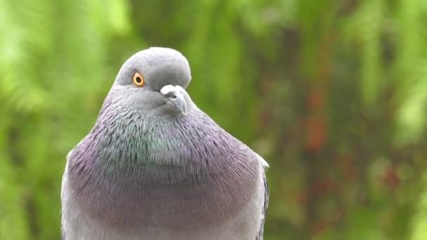 Colombe di piccioni di animale in natura verde