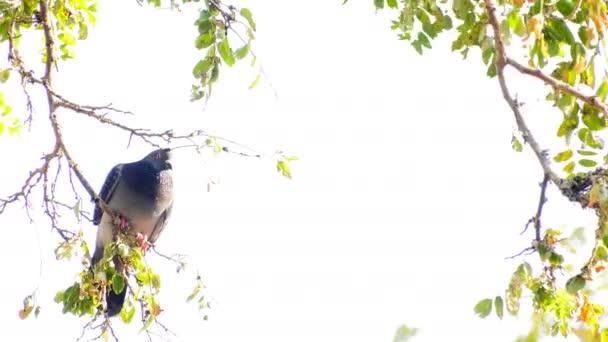 Tier Vögel Tauben auf Baum