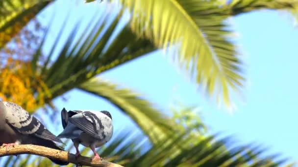 Állati madarak a galambok a fa