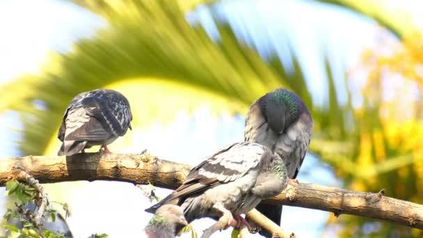 Piccioni di animali uccelli sullalbero