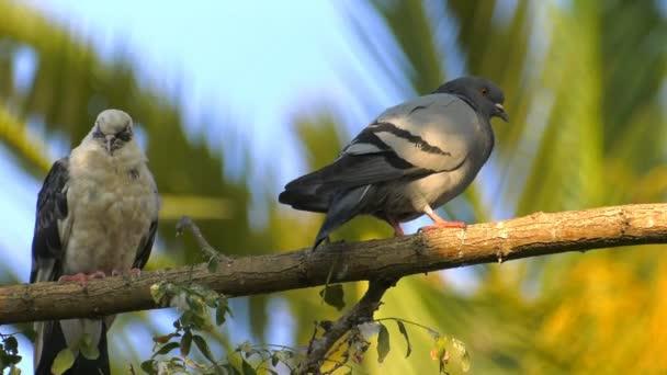 Holubi zvířat ptáci na stromě