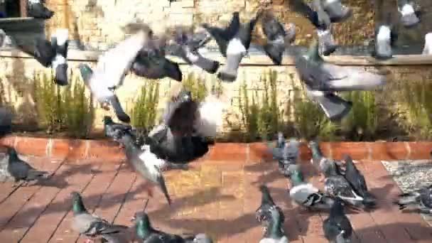 Uccello animale piccioni Colombi