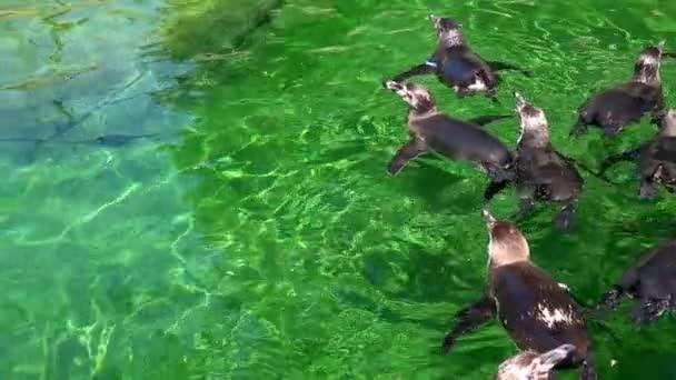 Állati pingvin zöld tiszta víz