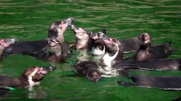 Tučna zvířat v zelené čisté vodě