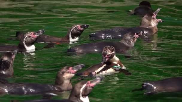 Tierischer Pinguin in grünem, reinem Wasser