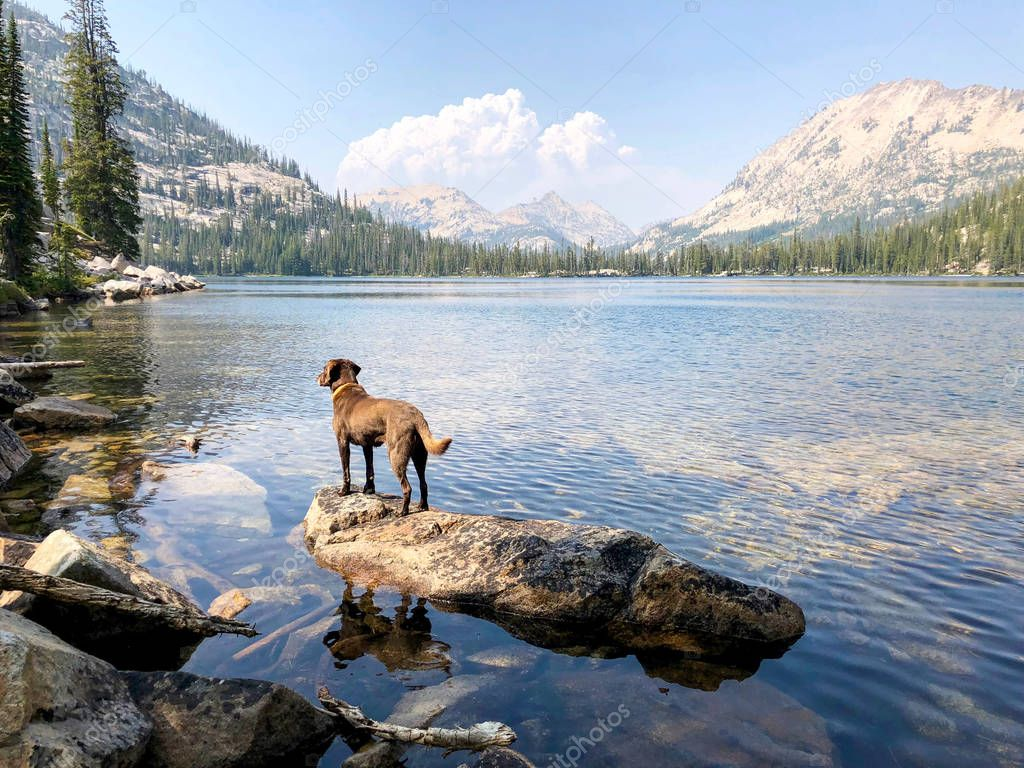 Chocolate labrador retriever standing on a granite rock near the shore of a high mountain lake in Idaho while wildfire smoke cloud billows in the background.