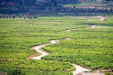 Road through the vineyards in Ll��ber, Spain
