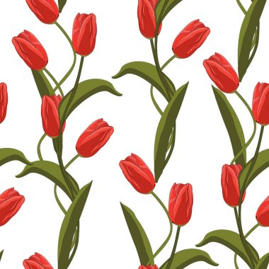 Tulips seamless pattern. Vector illustration. Spring red flowers on white background.