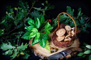 honey mushrooms in a small basket on a pine hemp