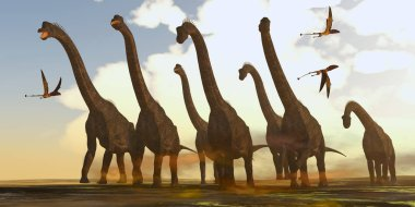 Dimorphodon reptiles fly past a herd of Brachiosaurus dinosaurs during the Jurassic Period.
