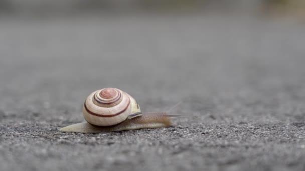 Šnek se plazí po asfaltové silnici
