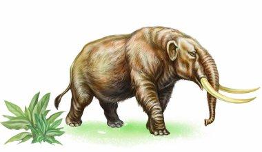 ancient mammoth, extinct mastodon, realistic image isolated on white background