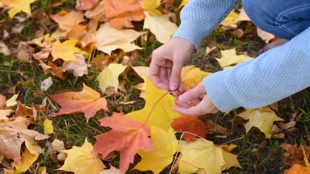 Woman pick up colorful autumn leaves in park