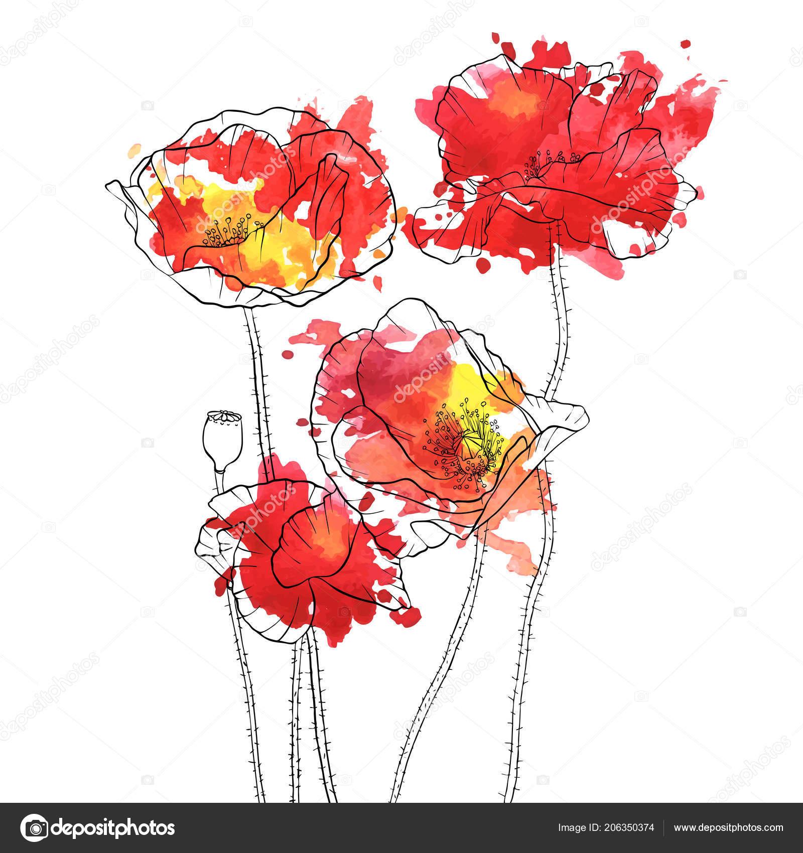 Vector Drawing Poppy Flowers Stock Vector Catarchangel 206350374