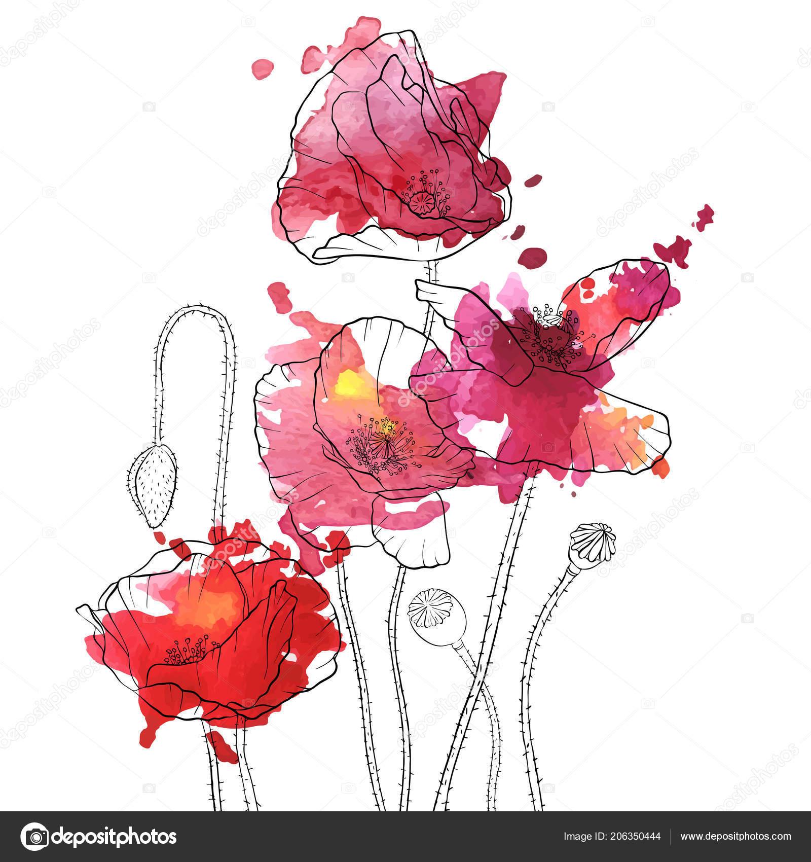 Vector drawing poppy flowers stock vector catarchangel 206350444 vector drawing poppy flowers stock vector mightylinksfo