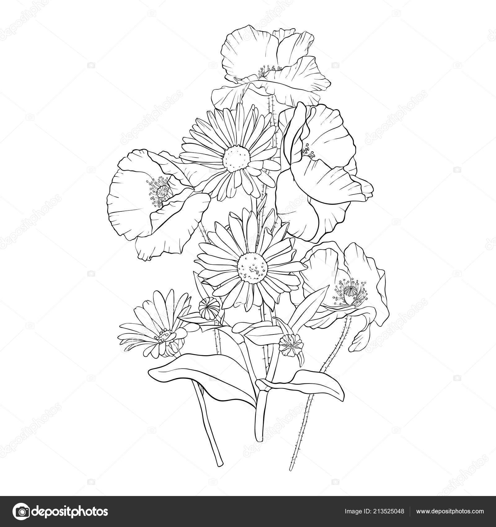 Vector Drawing Poppy Flowers Stock Vector Catarchangel 213525048