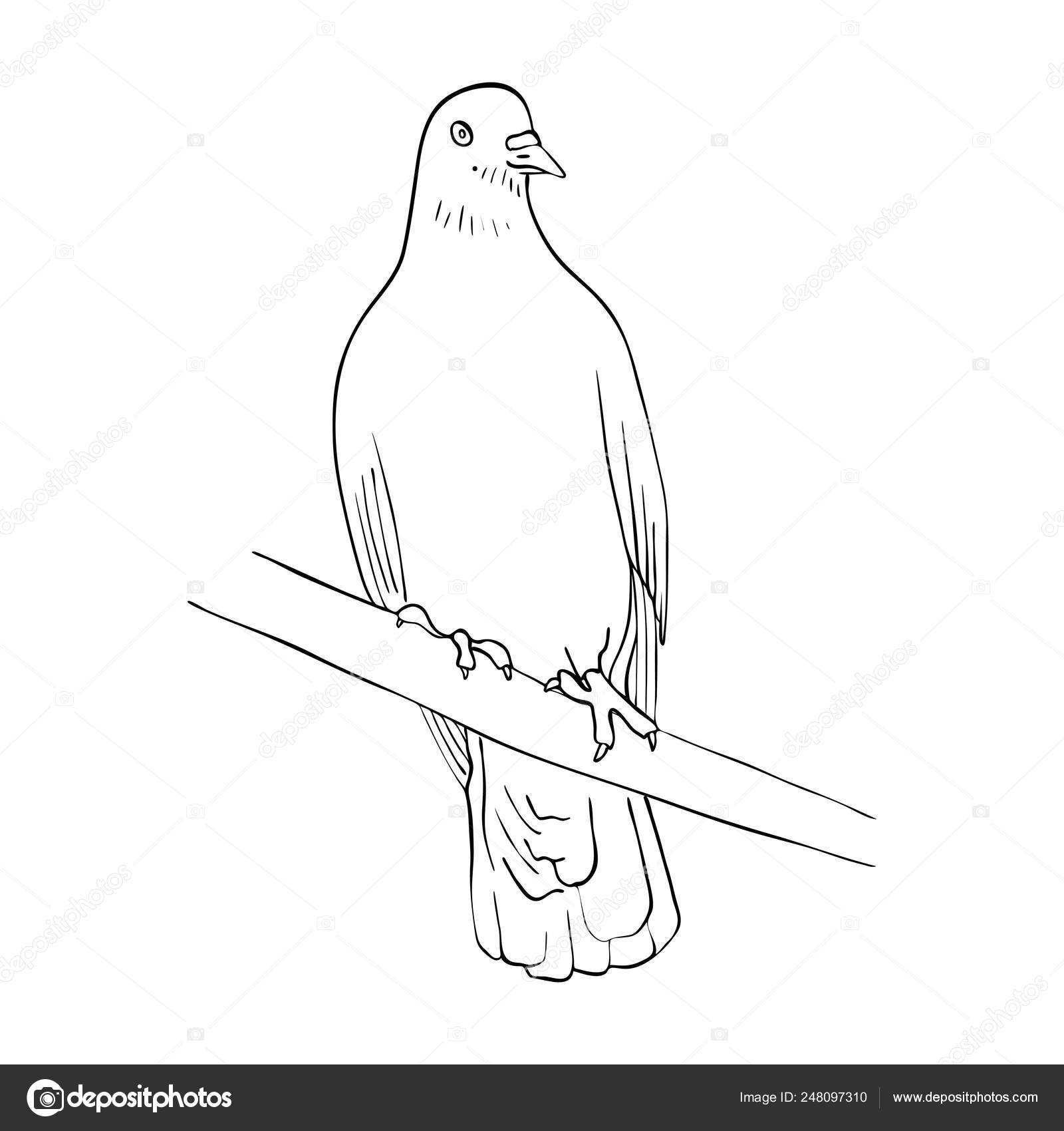 Bird On Tree Branch Drawing Bird At Tree Branch Stock Vector C Cat Arch Angel 248097310