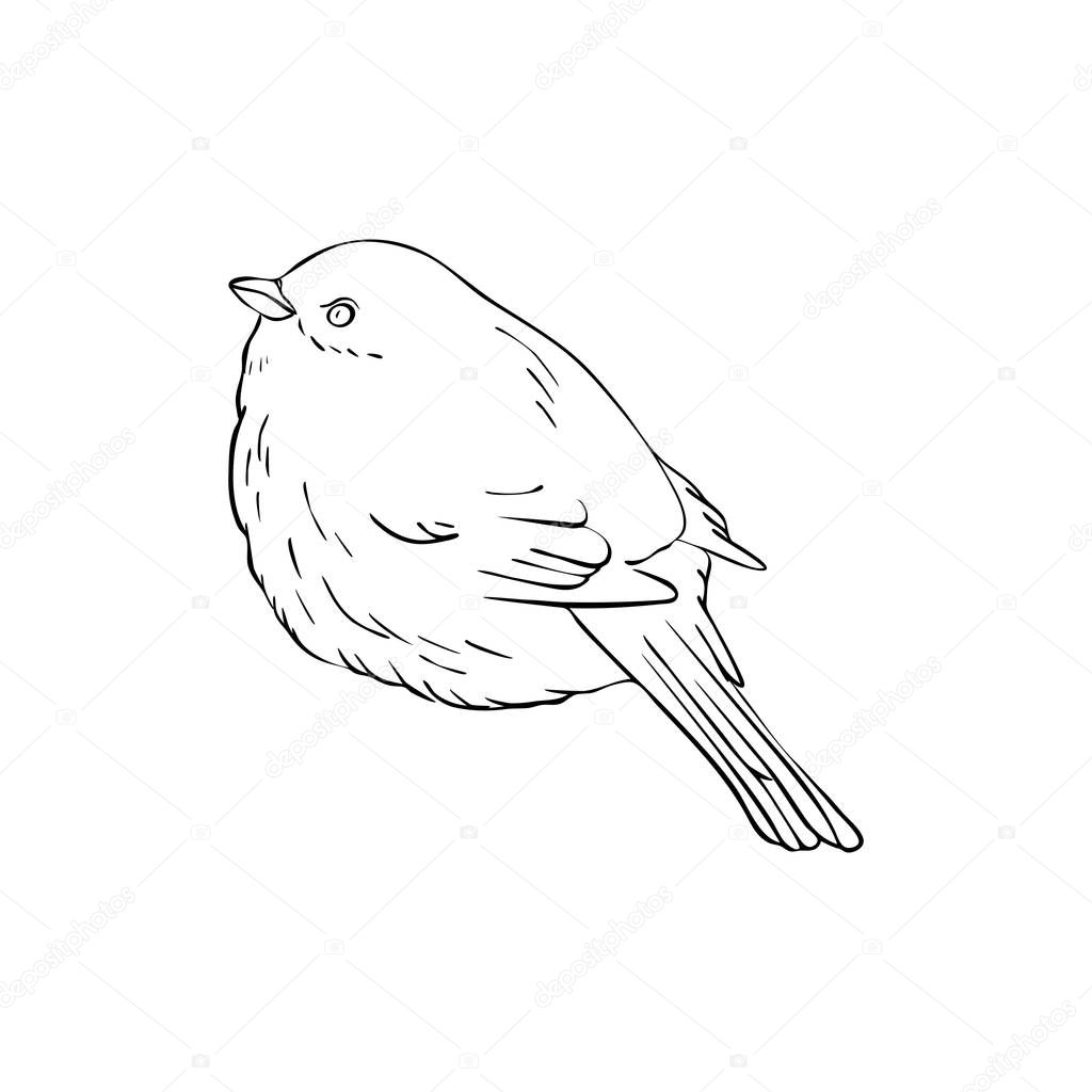 Vector Line Drawing Bird Sitting At Tree Branch Sketch Of Sparrow Hand Drawn Songbird Isolated Nature Design Element Premium Vector In Adobe Illustrator Ai Ai Format Encapsulated Postscript Eps Eps Format
