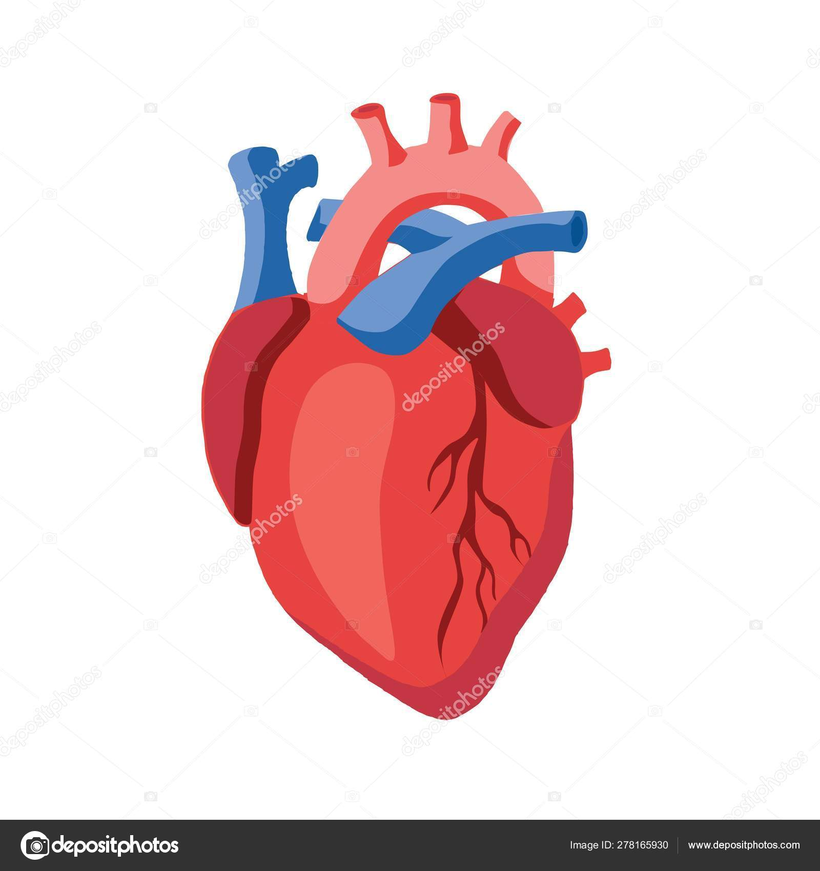 Human heart icon illustration — Stock Vector © movinglines