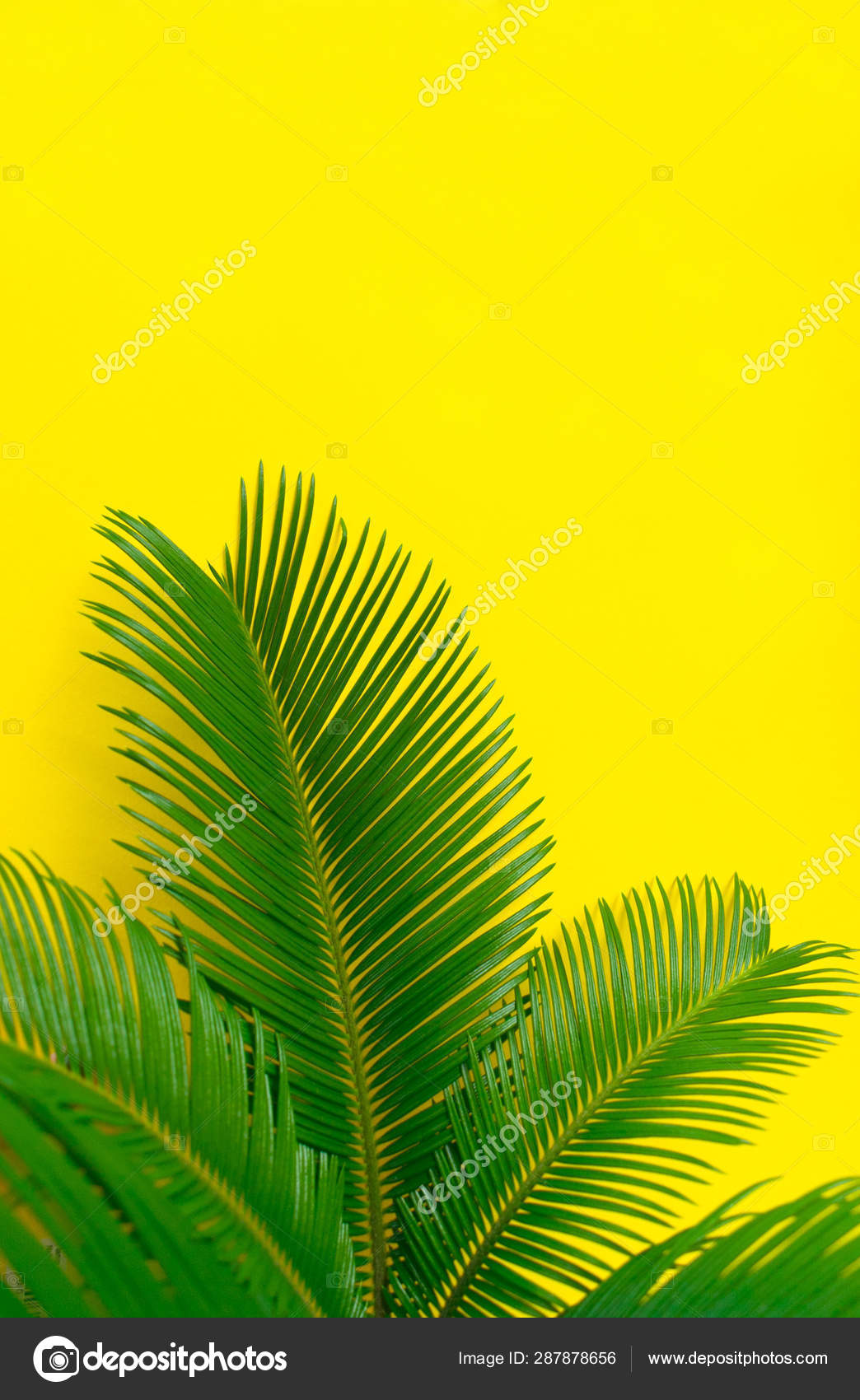 Tropical Palm Leaves Bright Yellow Background Creative Layout Real Tropical Stock Photo C Olivka888 287878656 Feel free to send us your own wallpaper and we will consider adding it to appropriate category. tropical palm leaves bright yellow background creative layout real tropical stock photo c olivka888 287878656