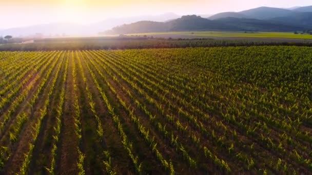 Letecká nadjezdu Shot krásných vinic v západu slunce, mohutných hor v pozadí.