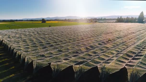 Aerial Shot of Beautiful Vineyards with Grape Bushes Carefully Covered with a Net for Protection. Amazing Scenic View of Magnificent Nature.