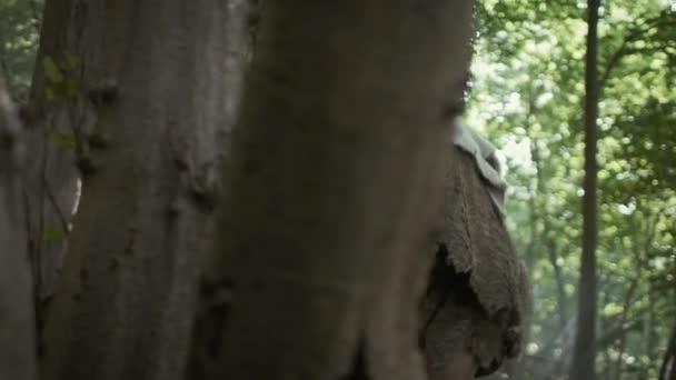 Primeval Caveman viselése állati bőr tart Stone tipped Spear körülnéz, tárja őskori erdő a vadászat az állati ragadozó. Neander-völgyi Going vadászat a dzsungelben