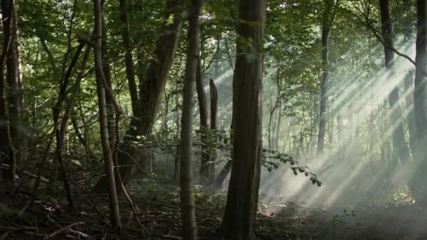 wilde grüne unberührte jugnle Wald. Sonne scheint durch drei Brunches