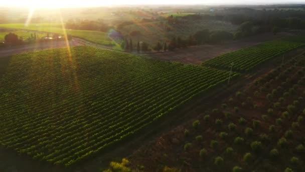 Aerial Drone Footage: Gyönyörű mezőgazdasági ültetvények. Farming Fields of Zöldségek, Szőlőültetvények, Olajfák és Szójabab. Masszív ipari skála Környezettudatos élelmiszertermelés növekedése