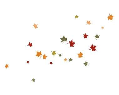 autumn Leaf  vector ilustration