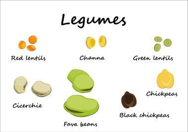 legumes illustrated and isolated on white background, chickpeas, cicerchie, broad beans, channa peas, and red and green lentils